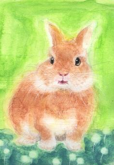 Omeme Kurikuri rabbit