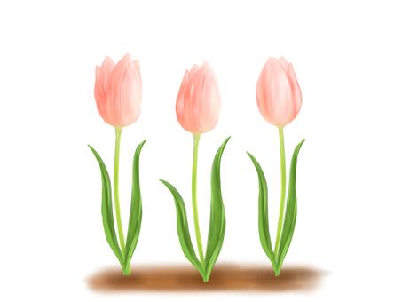 Tulip ③