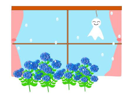 Hydrangea's hydrangea blooming window on the window of Terutel
