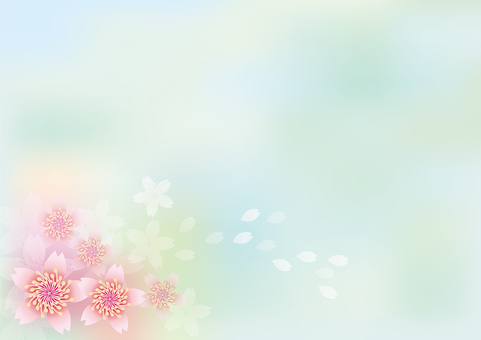 桜 flowers blooming 247