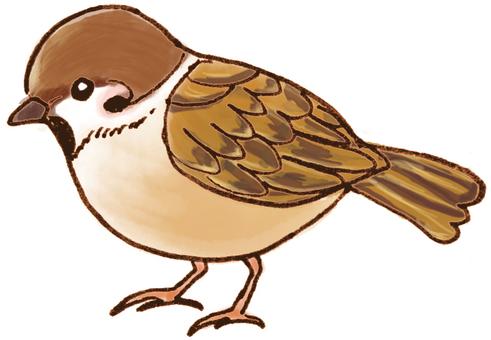 Sparrow (sideways)