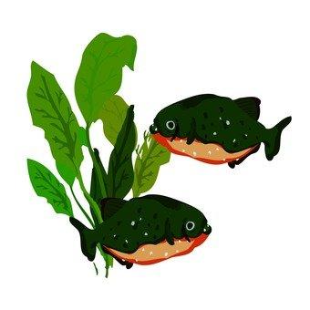 Piranha (aquarium)
