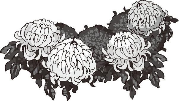 Flower (chrysanthemum · monochrome hand-painted)