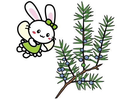 Aroma Usako (Juniper)