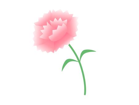 카네이션 (엷은 핑크)