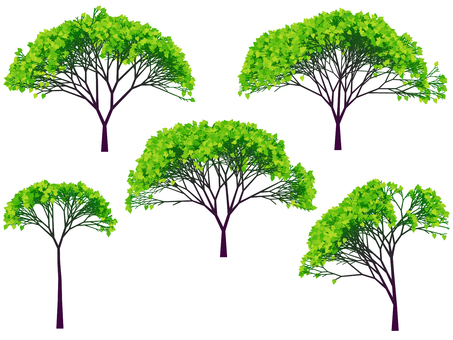 Tree Illustration 20