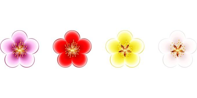 Colorful plum