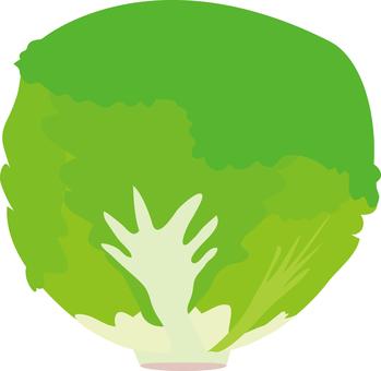 Food Series Vegetable Bots Version Lettuce