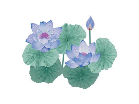 Lotus ☆ green
