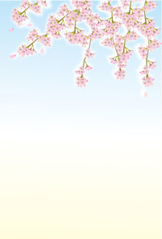 Weeping cherry blossom background