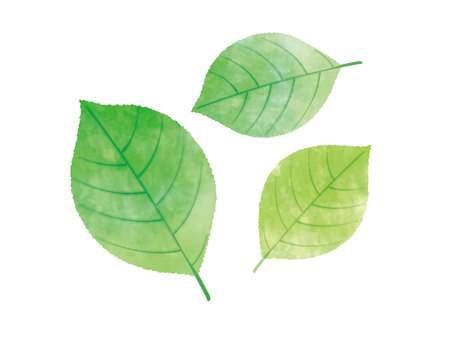 Illustration of watercolor leaves