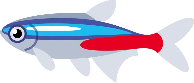 Neon Tetra Tropical Fish Aquarium Fish Aquarium