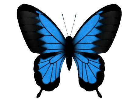 Oorria swallowtail