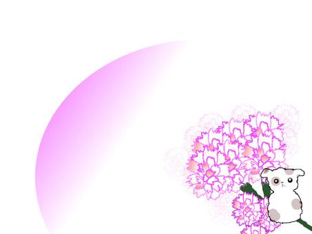 Carnation frame 6