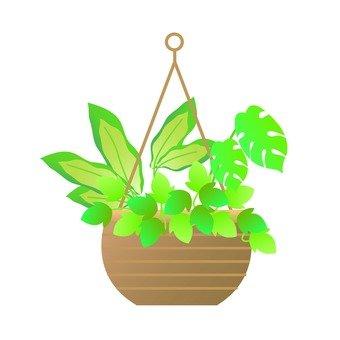 Houseplant - Famous Planting (Defenavia)
