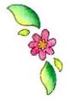 card : 꽃