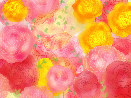 Ranunculus, flower monkey flower (Hana Kinkorge)