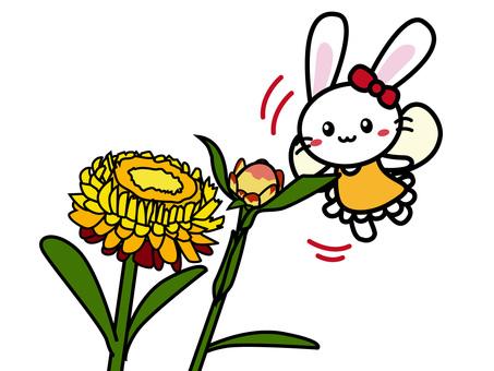 Aroma Usako (Helichrysum)