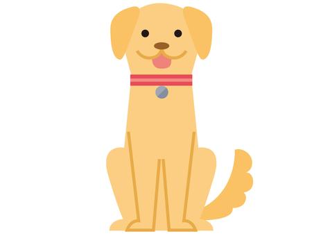 Dog _ 1