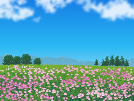 Plant of grassland of a flower of bricks 06