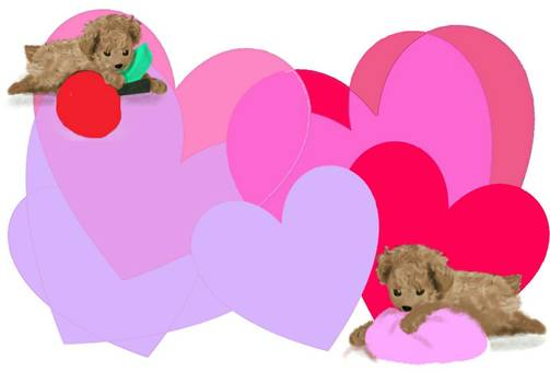 Puppy background toy poodle heart