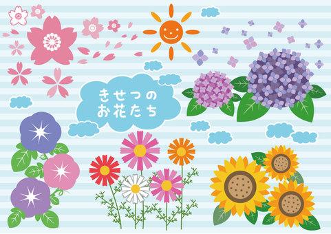 季節性鮮花