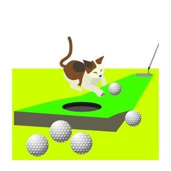 퍼터 연습을 방해하는 고양이