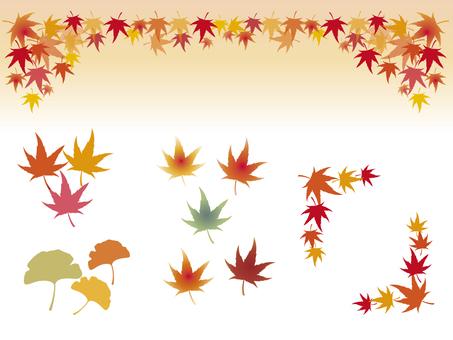 秋葉設置楓樹